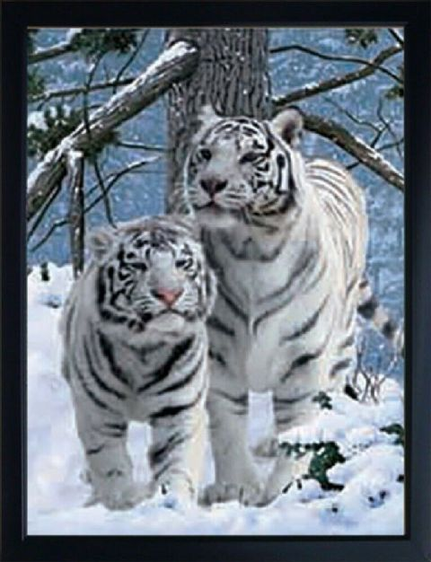 WHITE TIGERS IN SNOW 3D FRIDGE MAGNET  Great Christmas stocking filler
